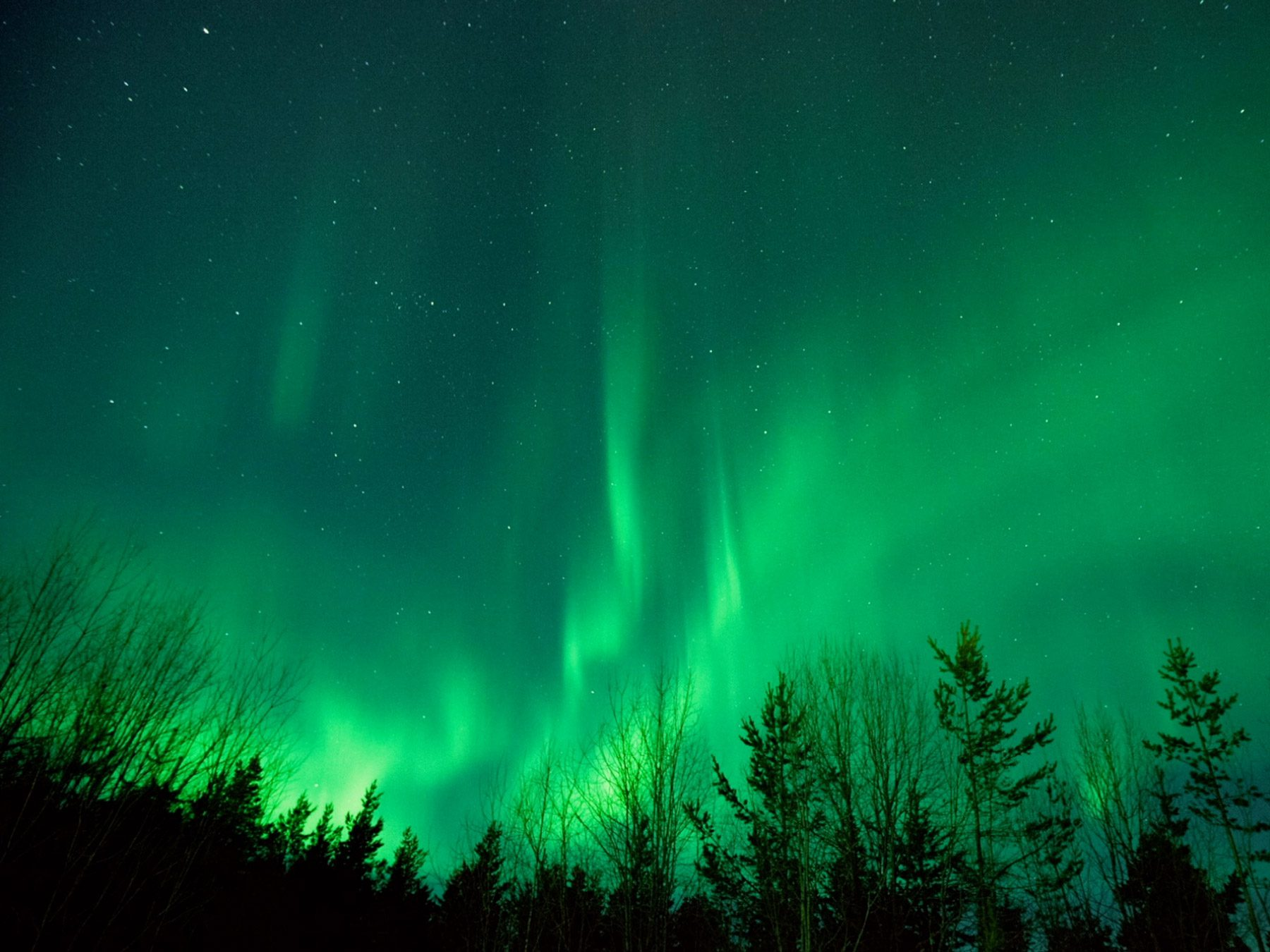 Northern lights with silhouette of trees