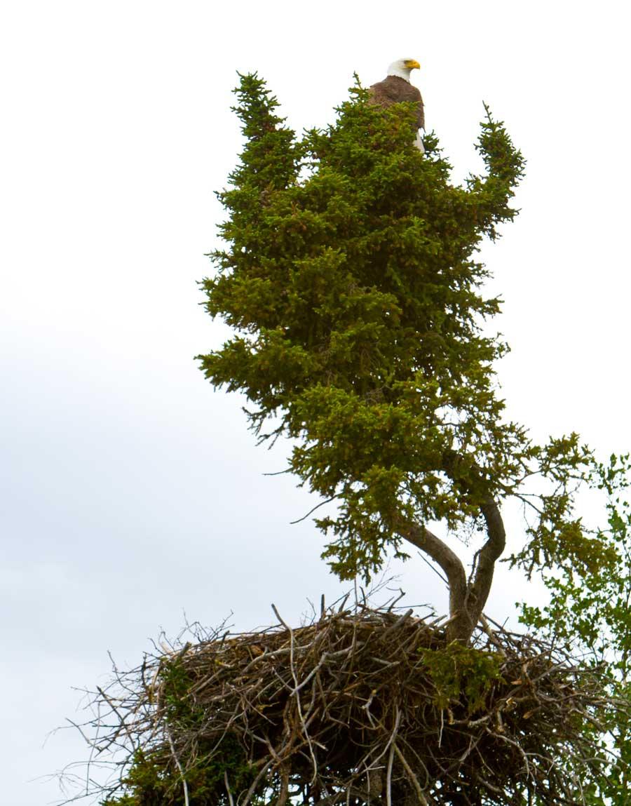 Eagle-Nest-IMG_3747