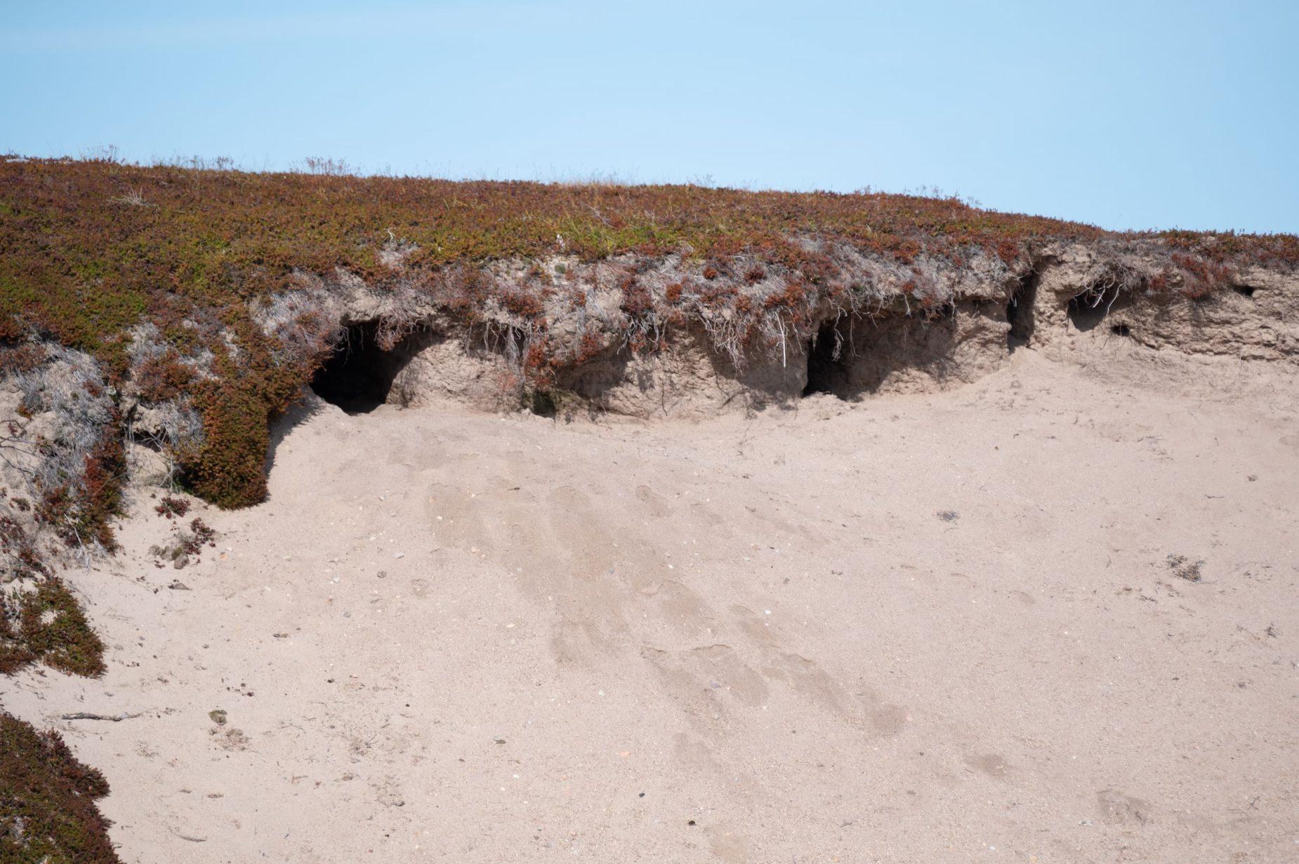 landscape image of a group of wolf dens
